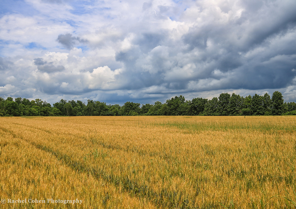 &quot;Heartland Storm&quot; <br />