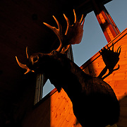 .A Moose head hanging on the wall in Hungry Jack Lodge in Northern, Minnesota.