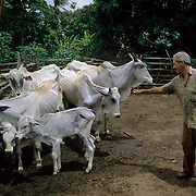 Small farmer watching his cattle feeding in Brazilian Highlands, Goias, Brazil