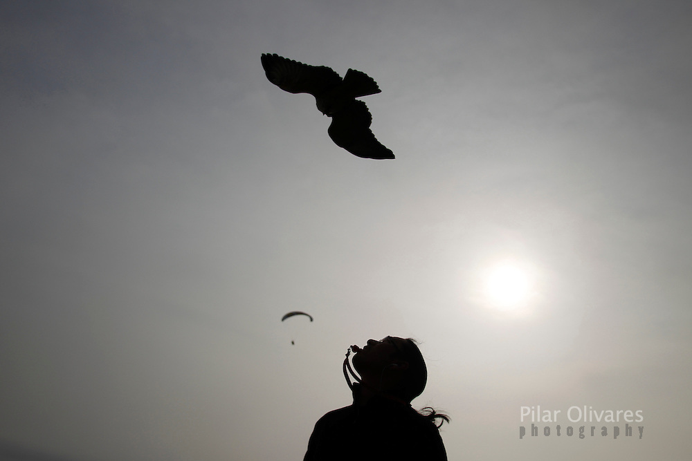 Peruvian Stanley Yep calls his red-backed hawk with a whistle at a paragliding park in Lima October 1, 2010. Yep trains his birds to do parahawking, where they fly with paragliders and guide them to the thermals.  REUTERS/Pilar Olivares (PERU - Tags: ANIMALS SOCIETY SPORT)