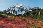 Mount Rainier: Paradise hikes