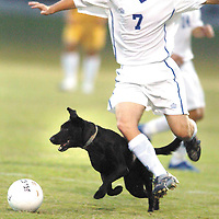"Franklin-Simpson senior Austin Perkins has the ball taken away by a dog that ran onto the field during a high school soccer match with Bowling Green. aekdb  ""Dogged Defender"""