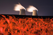 A fresh crop of corn grows under the looming cooling towers of the Byron Nuclear Power Plant.