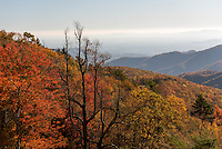 Fall foliage along the Blue Ridge Parkway in North Carolina