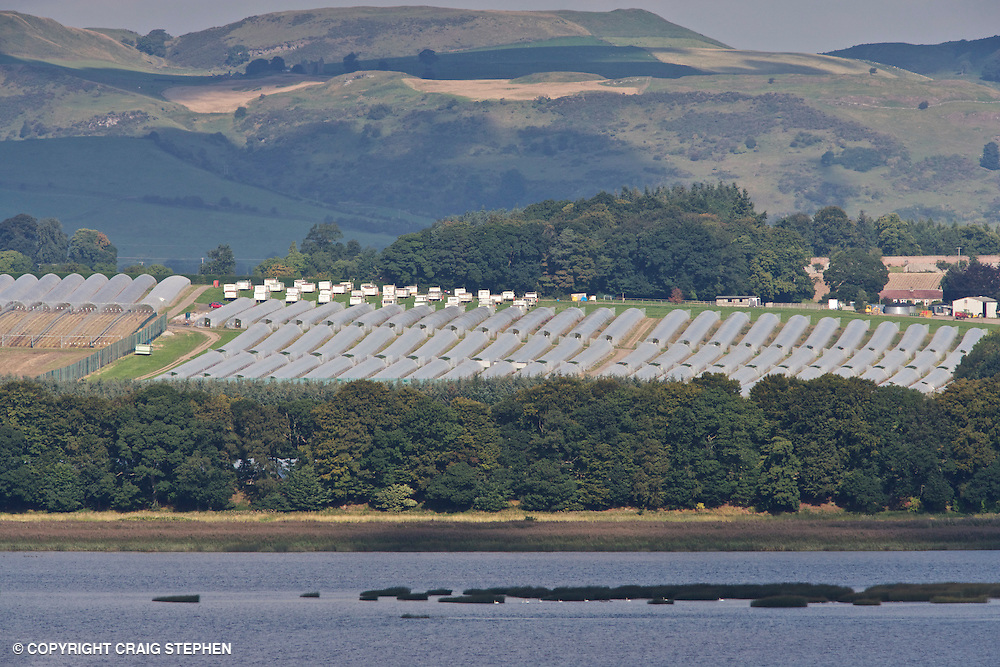 View of soft fruit farm in Perthshire