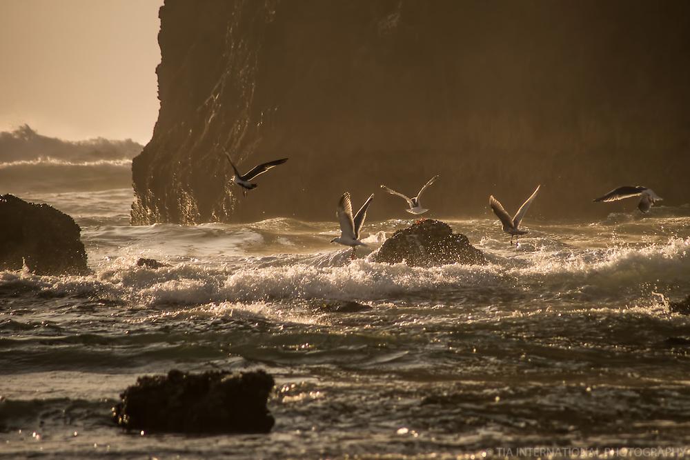 Seagulls at Haystack Rock, Cannon Beach, Oregon