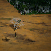 March 3rd 2006, Soy fields near Belterra, Para State, Brazil, some with isolated Brasilan nut trees (castanheira)...©Daniel Beltra