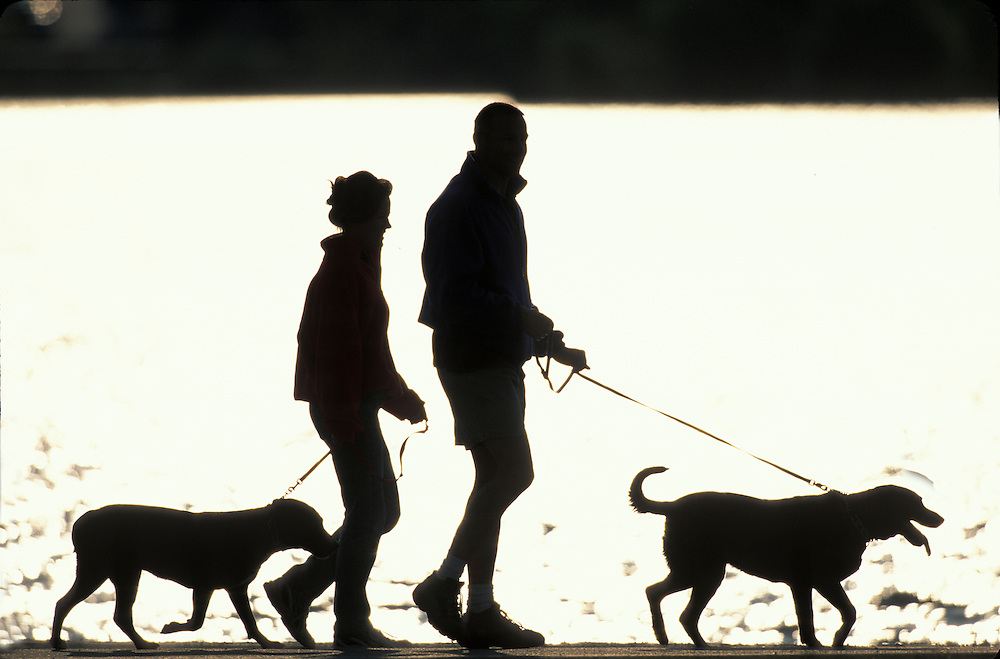 pics for gt walking dog silhouettes