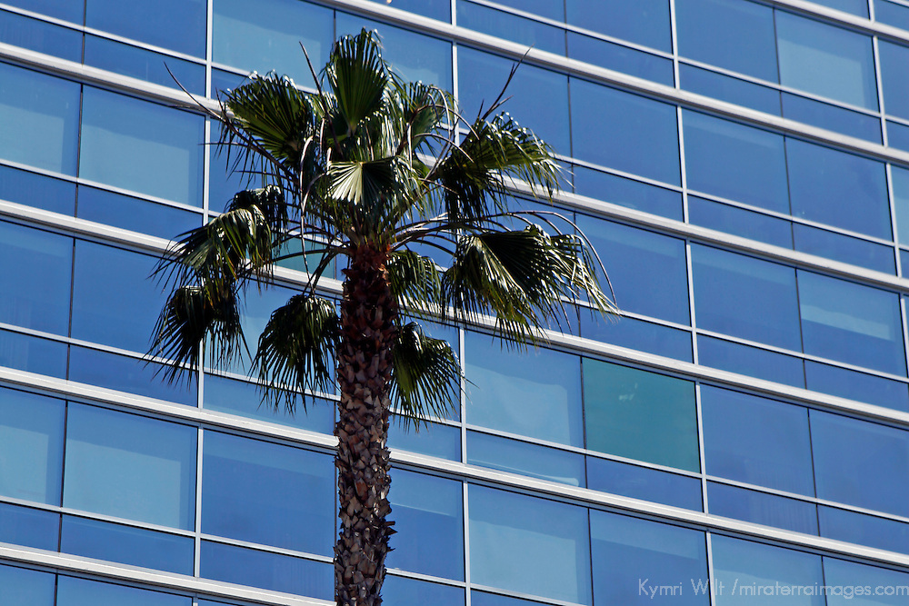 USA, California, Los Angeles. Palm Tree at Andaz West Hollywood Hotel, renovated 2006.