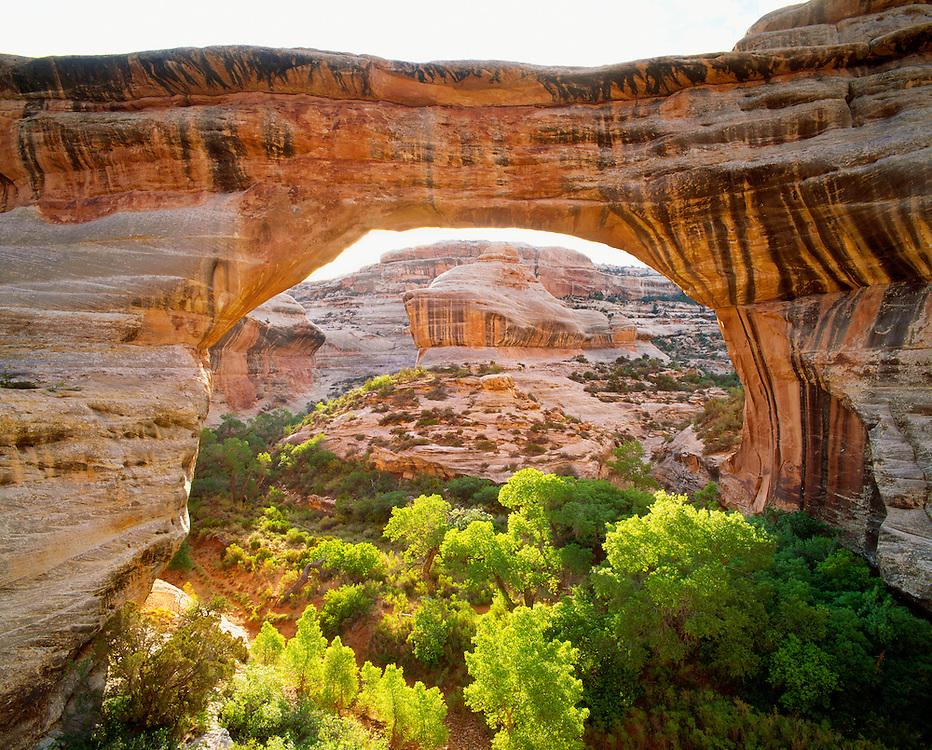 0309-1006B ~ Copyright: George H.H. Huey ~ Sipapu Bridge.  268 foot span, carved from Cedar Mesa sandstone by water erosion.  2nd largest natural bridge in the world.  Natural Bridges National Monument, Utah.