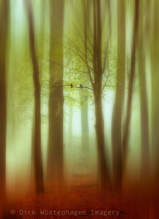 Abstraction o a forest in haze - manipulated photograph<br />