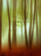 Abstraction o a forest in haze - manipulated photograph<br /> Society6 prints &amp; more: https://society6.com/product/april-haze-abstract_print#1=45