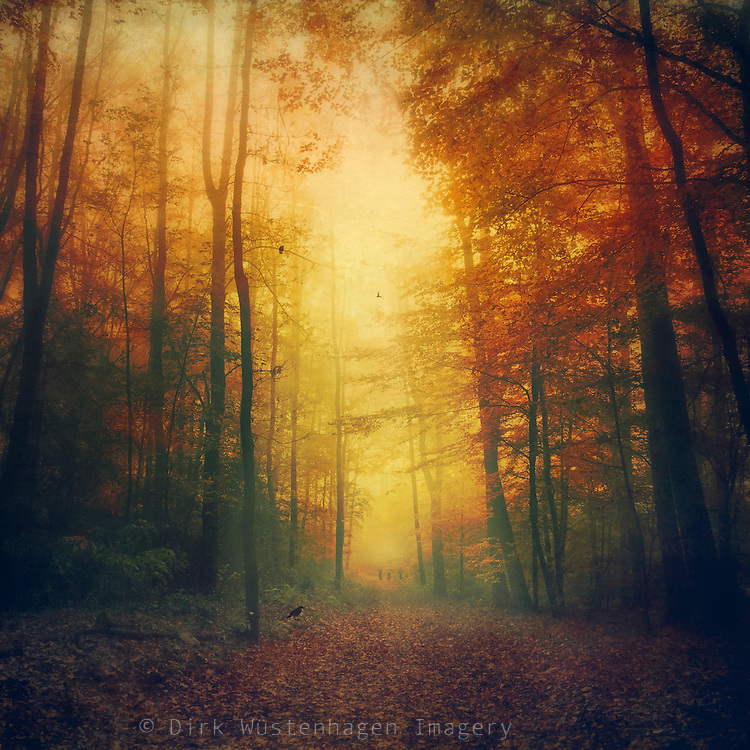 Atmospheric autumn morning walk through a forest.<br />