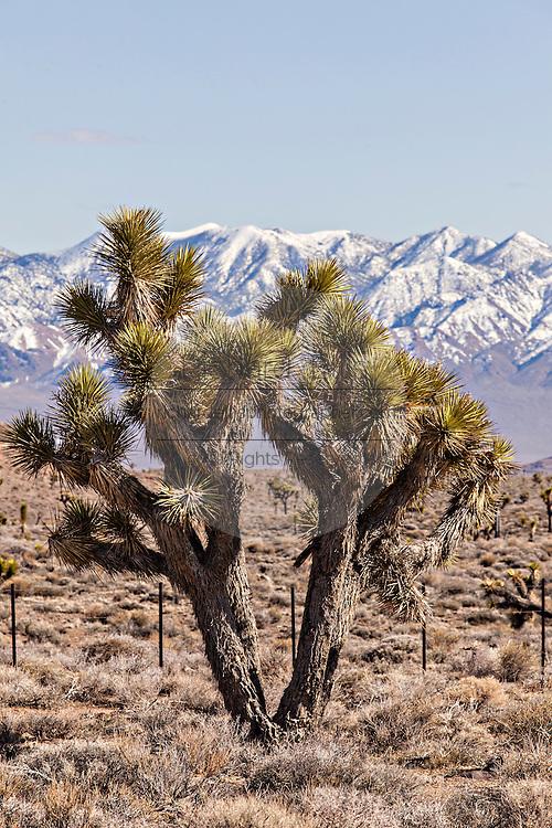 Monte Cristo mountains near Goldfield, Nevada, USA