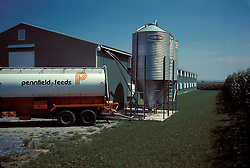 Trucker unloads feed corn into silo holding trench at poultry farm