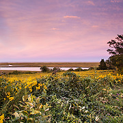 Goldenrod predominates in the late-summer bloom at Fort Hill in Eastham.