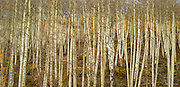 Wasatch Range, Utah<br /> Also available as a triptych, up to 60 x 120&quot;.