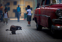 Stray dog poops in alley by vintage car