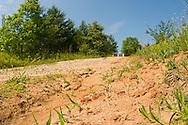Sweat Bee (Lasioglossum sp) nest mounds (tumulus), Pickens, South Carolina, USA