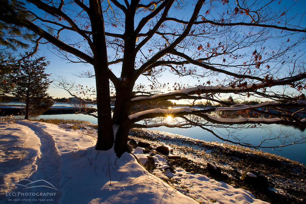 Early morning on the Goose Island Trail in Portsmouth, New Hampshire.