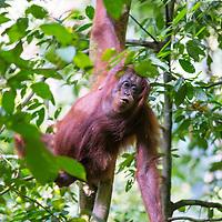 Sabah Wildlife
