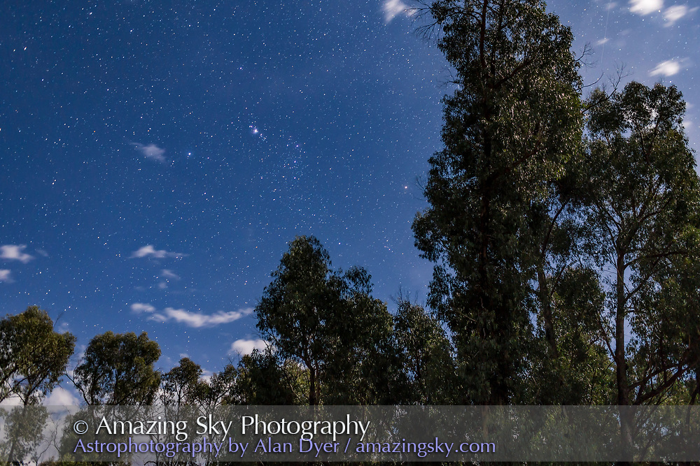 Orion above moonlit gum trees from Tibuc Cottage, Australia. <br /> <br /> A single shot with the 35mm lens and Canon 6D.