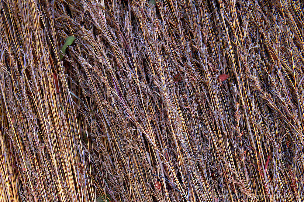 Africa, Botswana, Okavango Delta. Reeds of the Okavango Delta used to make shelter and roofs.