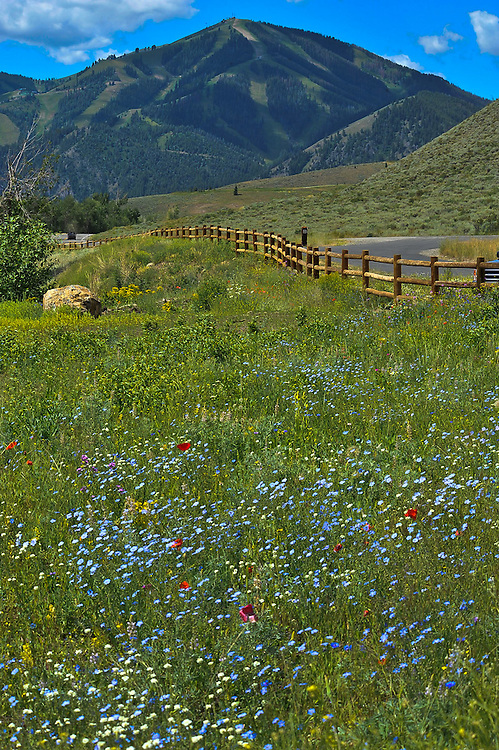 Bald Mountain with wildflowers, at the Hemingway Memorial