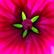 Flowers - Red and purple gallery