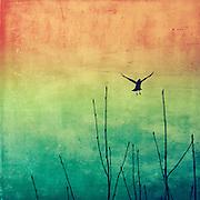Bird flyin away - <br /> prints &amp; more. http://society6.com/DirkWuestenhagenImagery/AEriaL-VXp_Print