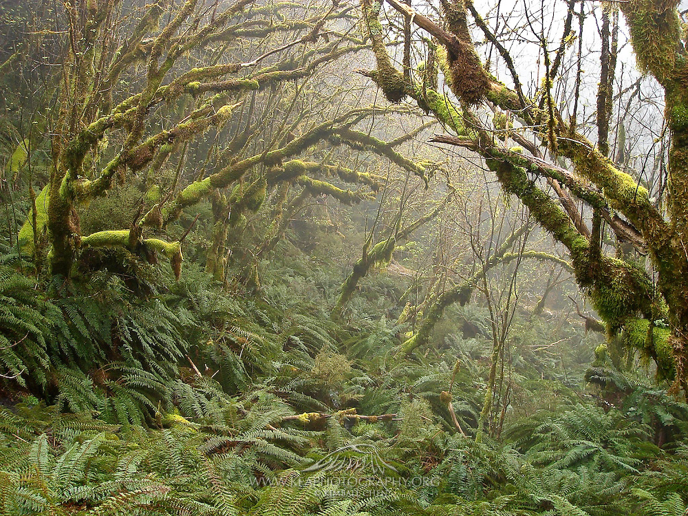hiking through the forest along the Routeburn Track, New Zealand