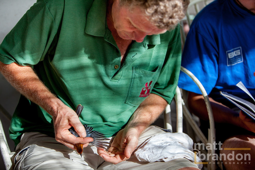 Colin Jackson of A Rocha inspects a birds's wing feathers for wear and age.