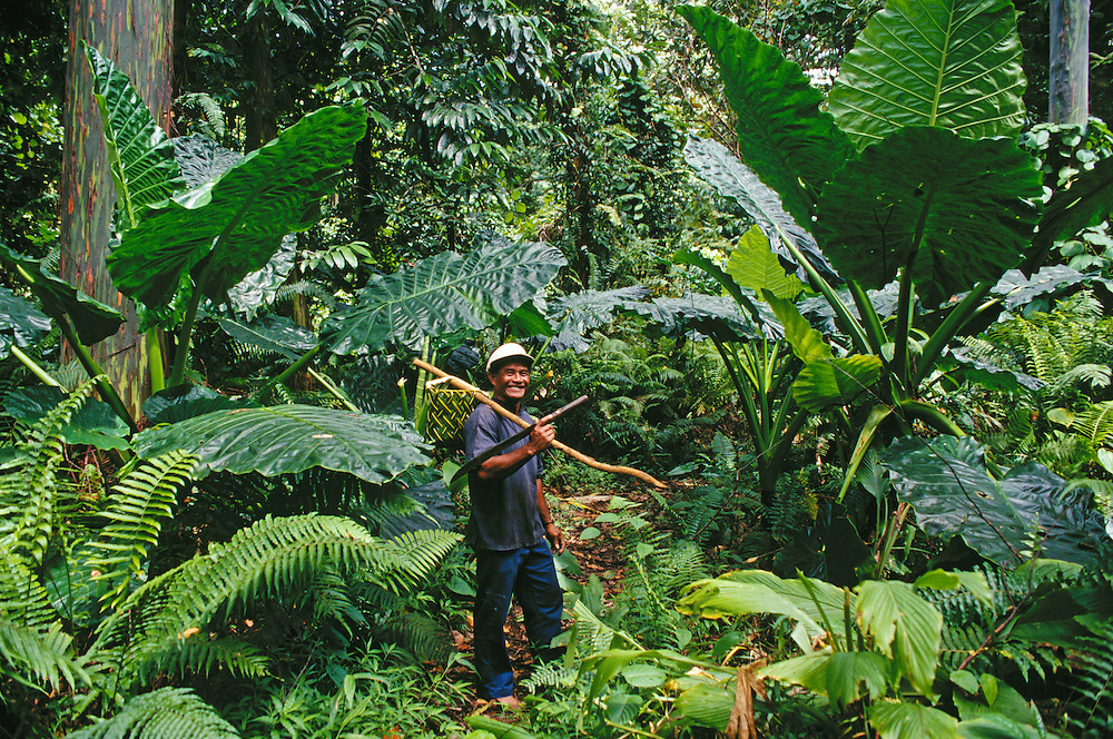 Kosrae, Micronesia: Tadao Waguk in tropical rainforest on the trail to Menke Ruins.