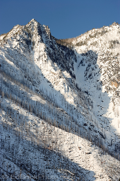 Forest fire scars blanket Sleeping Lady Mountain in winter, Wenatchee National Forest, Washington, USA