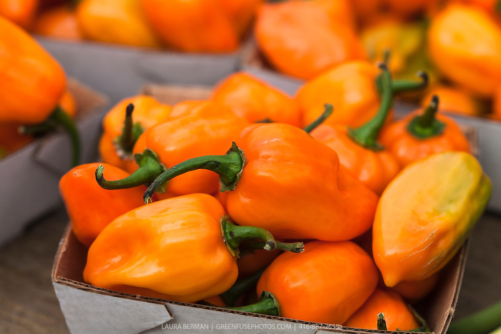 Habanero peppers at a farmers market,