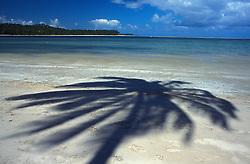 Recife, Pernambuco, Brasil. 03.01.03..Sombra de Coqueiro na praia de Carneiros./ Shadow of a Coconut tree in Carneiros beach..Foto © Adri Felden/Argosfoto