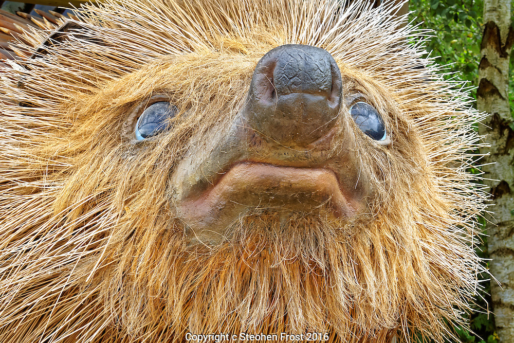 A Close-Up of a Giant English Hedgehog, not real but big!