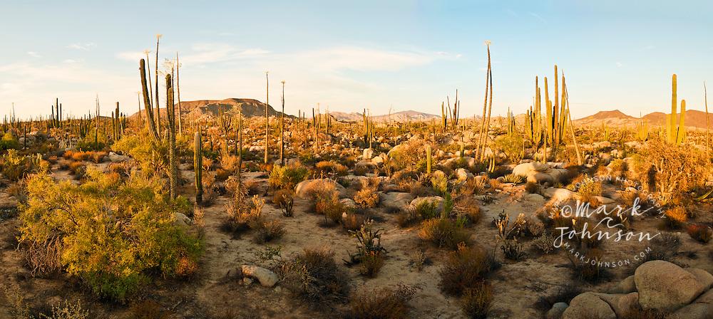 Gorgeous Sonoran Desert scenery, near Cataviña, Baja California, Mexico