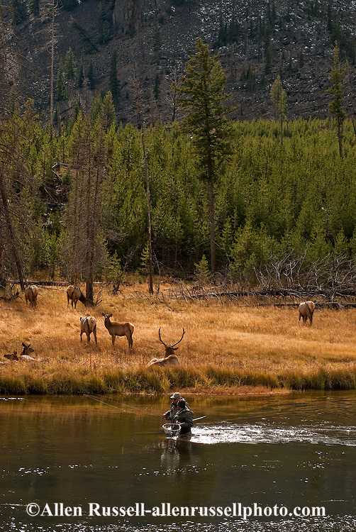 Fly fishermen and elk on madison river in yellowstone for Fly fishing yellowstone river