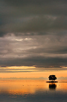 A Mangrove tree in the sea at sunset. Photo taken off a tropical island in Fiji.