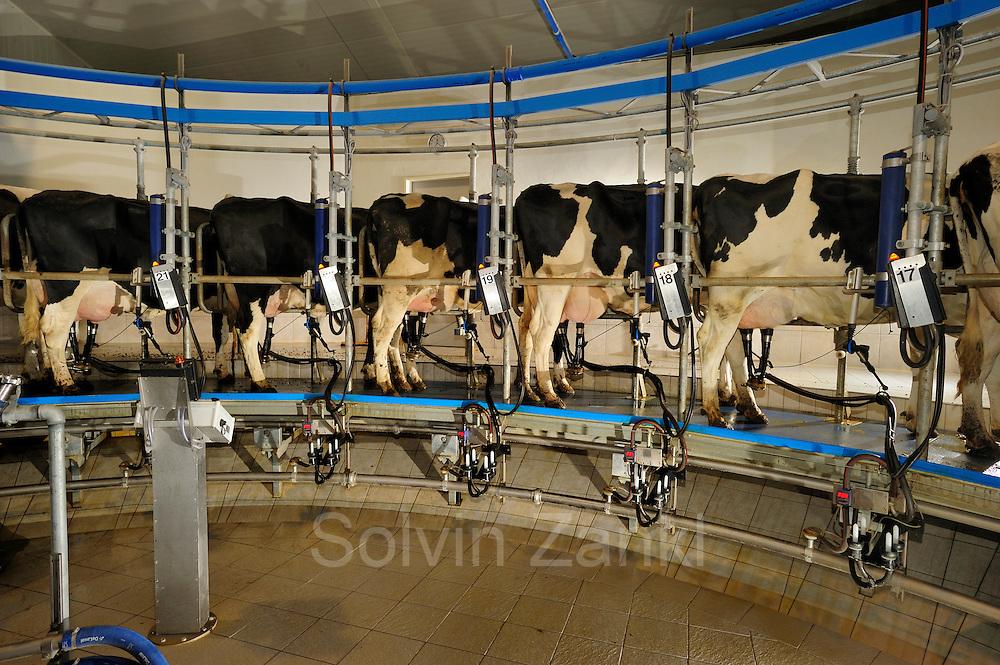 Dieses Melkkarussell ist ein Innenmelker, bei dem die Kühe im sogenannten Fischgrätensystem angeordnet sind. Hof: Stephan van den Berg, Kleve-Warbeyen