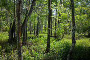 Cypress Swamp, Jean Lafitte, LA