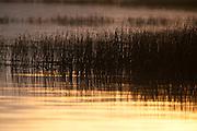 Flooded grasses in Ninepipe National Wildlife Refuge, Montana