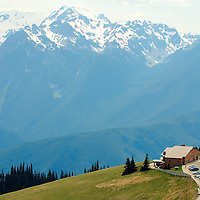 Hurricane Ridge - Olympic Mountains - Olympic National Park, WA