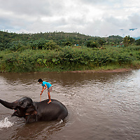 An elephant keeper bathes his elephant in the Pai River at the end of the day of giving tourists rides near Pai, Thailand