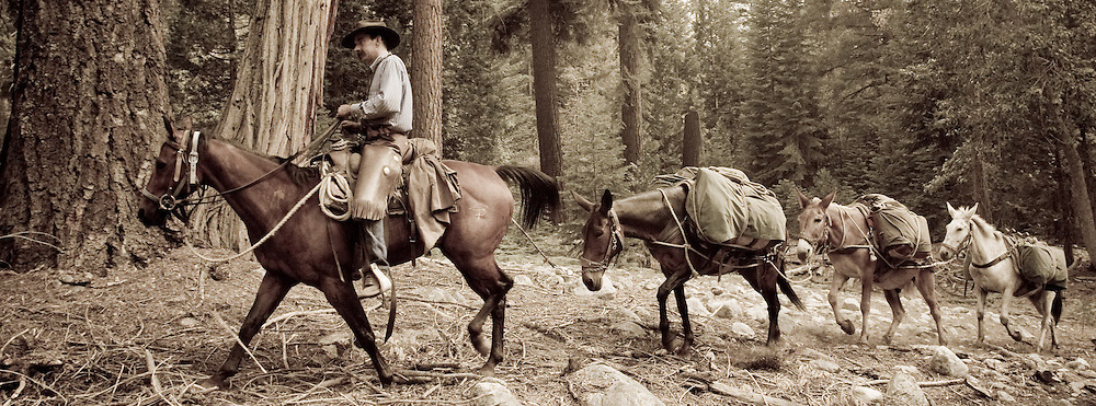 Packer and mule-train climbing into the Sierra Nevada with our gear for six days.