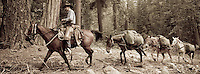 Packer and horses in the Sierra Nevada of California