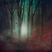 Mysterious forest in fog scenery<br /> Society6 products here: http://bit.ly/2bbblsH