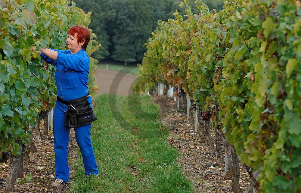 04/10/06 - EGLISENEUVE PRES BILLOM - PUY DE DOME - FRANCE - Vignes de GAMAY de Carole CHAMBELANT, viticulteur a la Cave Saint Verny. Cotes d Auvergne - Photo Jerome CHABANNE