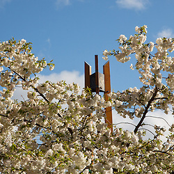 Anderson Clock Tower framed in blooming trees at PLU on Wednesday, April 10, 2013. (Photo/John Froschauer)